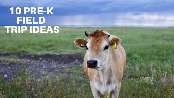 10 Pre-K Field Trip Ideas